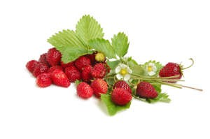 Wild Strawberries 2oz