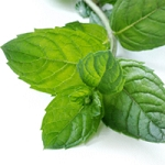 Peppermint  Essential Oil 2 oz. Crafter's Choice